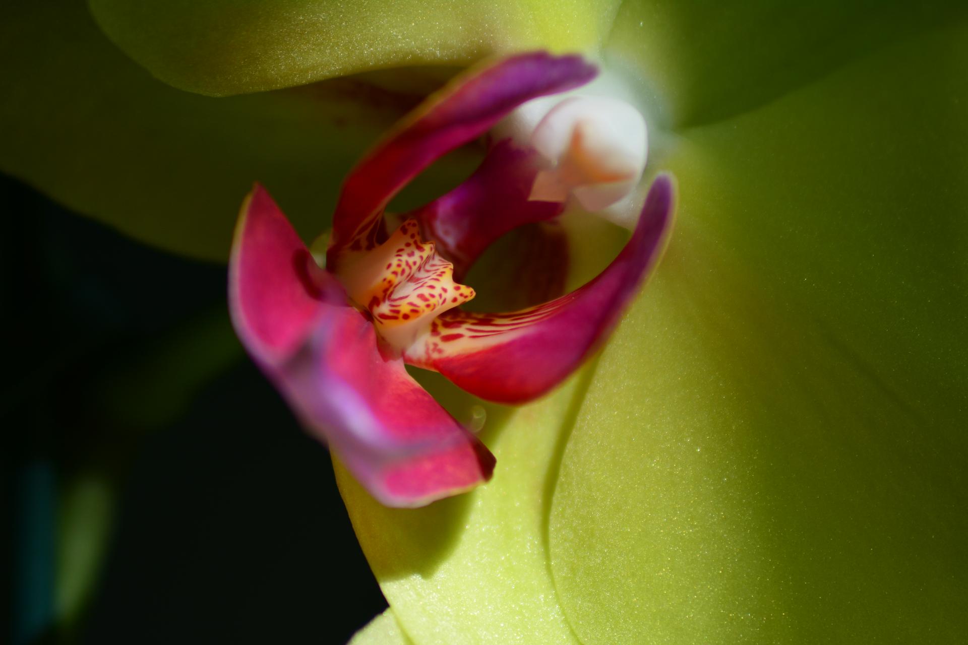 Orquídea 2 - Macro